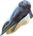 Watergulp