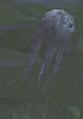Fungal Spore