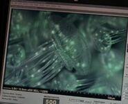 Medusa (The X-Files)