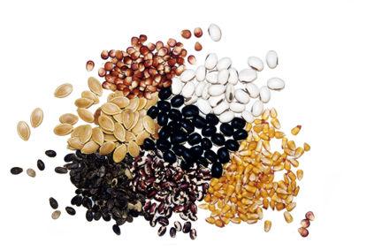 File:Seeds (1).jpg