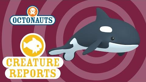 Octonauts- Creature Report - Orca