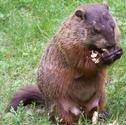 Real Life Groundhog