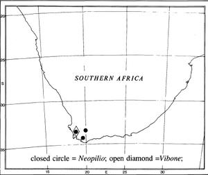 Location Vibone-vestuta kauri-1961