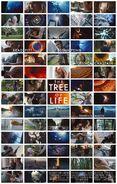 TreeLife 71