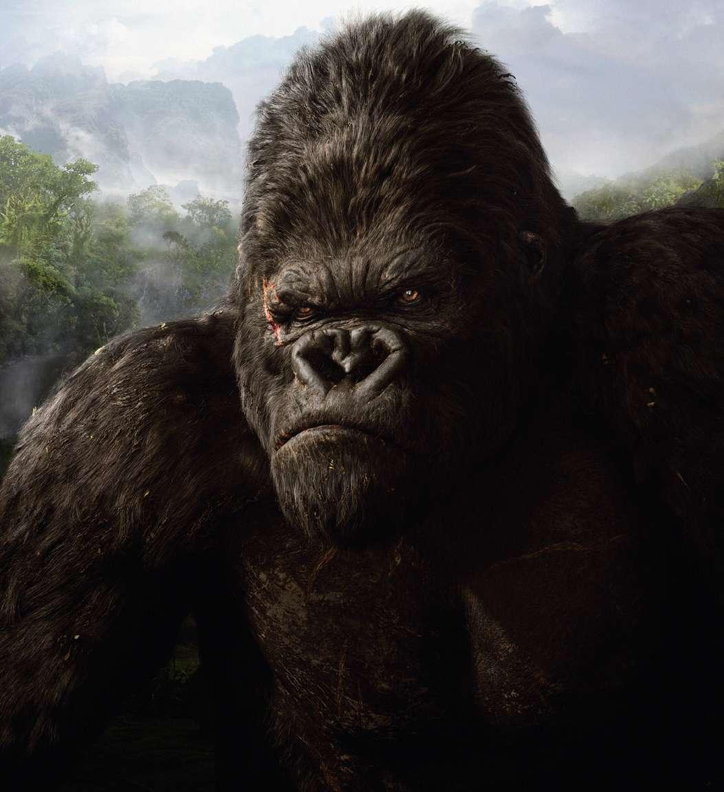 Kin Kong