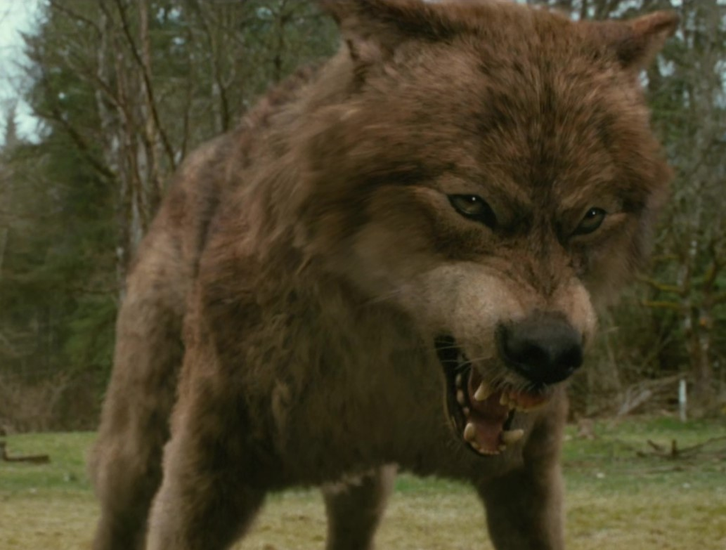 Jacob Black Wolf Transformation Jacob Black 39 s Wolf Form