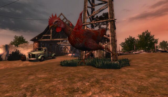 File:Hen in Animal Farm.JPG