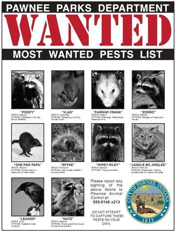 File:PawneeMostWantedPests.jpg