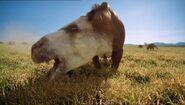 BBC.Prehistoric.Park.4of6.Saving.the.Sabretooth.XviD.AC3.6ch.MVGForum.avi snapshot 09.44 -2016.10.21 20.09.24-