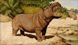 800px-Jean Bungartz Hippopotamus