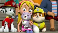 The Cat Show 33