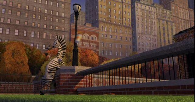 File:Zebra 7.jpg