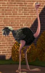 File:Ostrich2.jpg