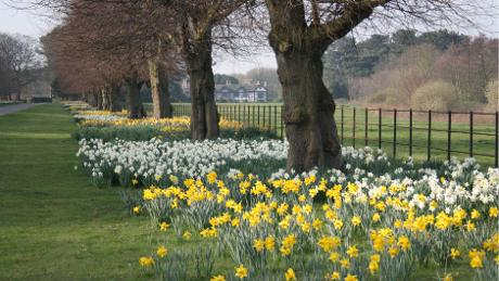 File:Tulips at Speke Hall.jpg