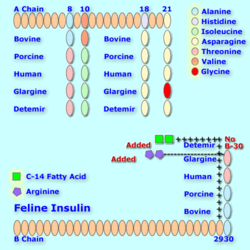 Felineinsulin analog