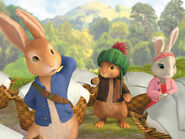Peter rabbit three firends