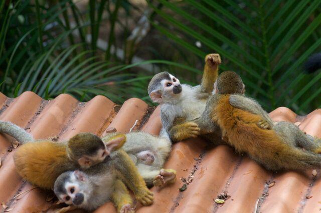 File:Happy Monkey.jpg