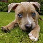 File:Puppy avatar 3.jpg