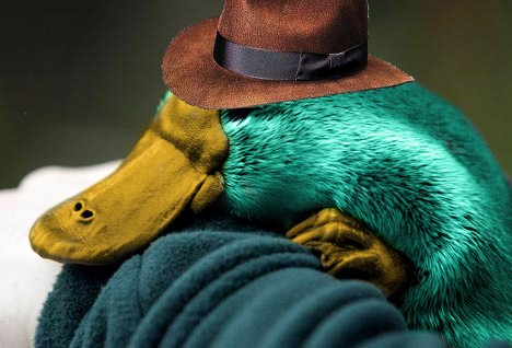 File:Perry the Platypus, by optical-jackson.jpg