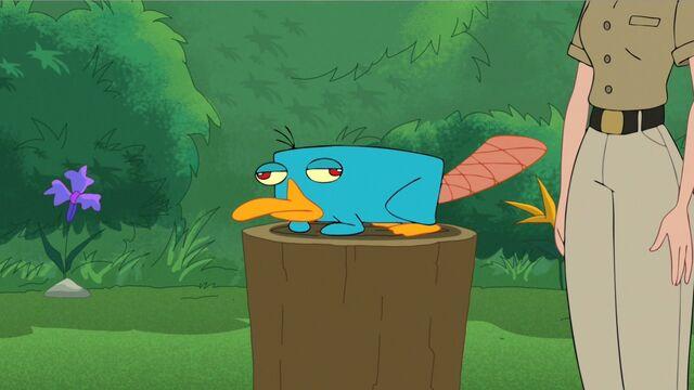 File:Danville Zoo's new platypus.jpg