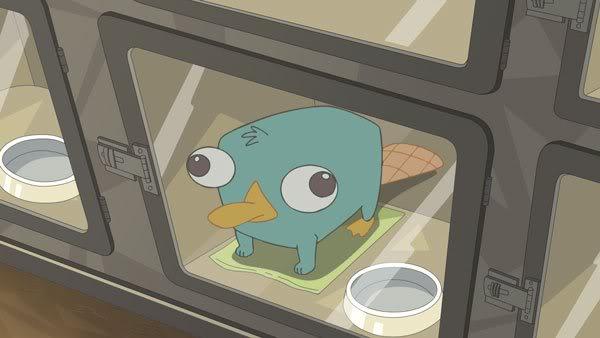 File:Baby Perry.JPG