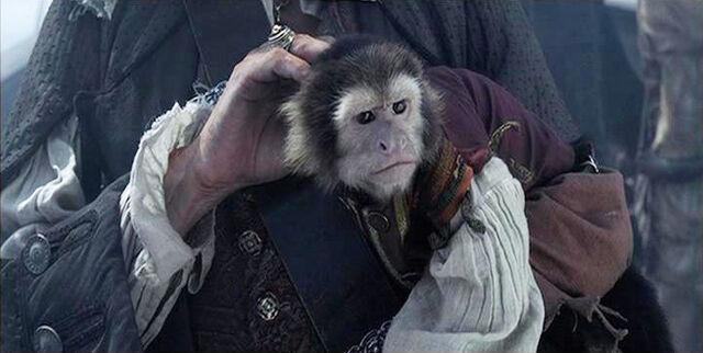 File:Jack monkey squint.jpg