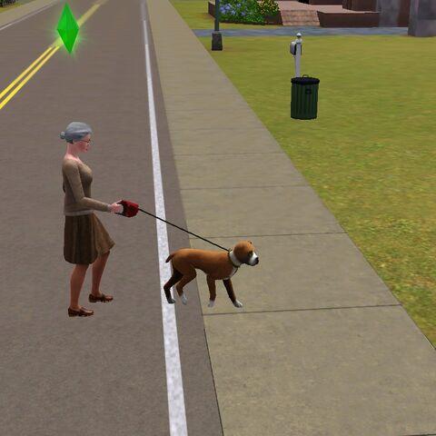 Vera na spacerze ze swoim psem Walterem