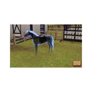 Duch konia