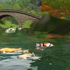 Ryby w Shang Simla