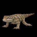 Texas Horned Lizard.png