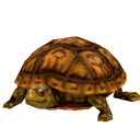 Eastern Box Turtle.png