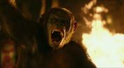 Koba sees Stone before he was killed