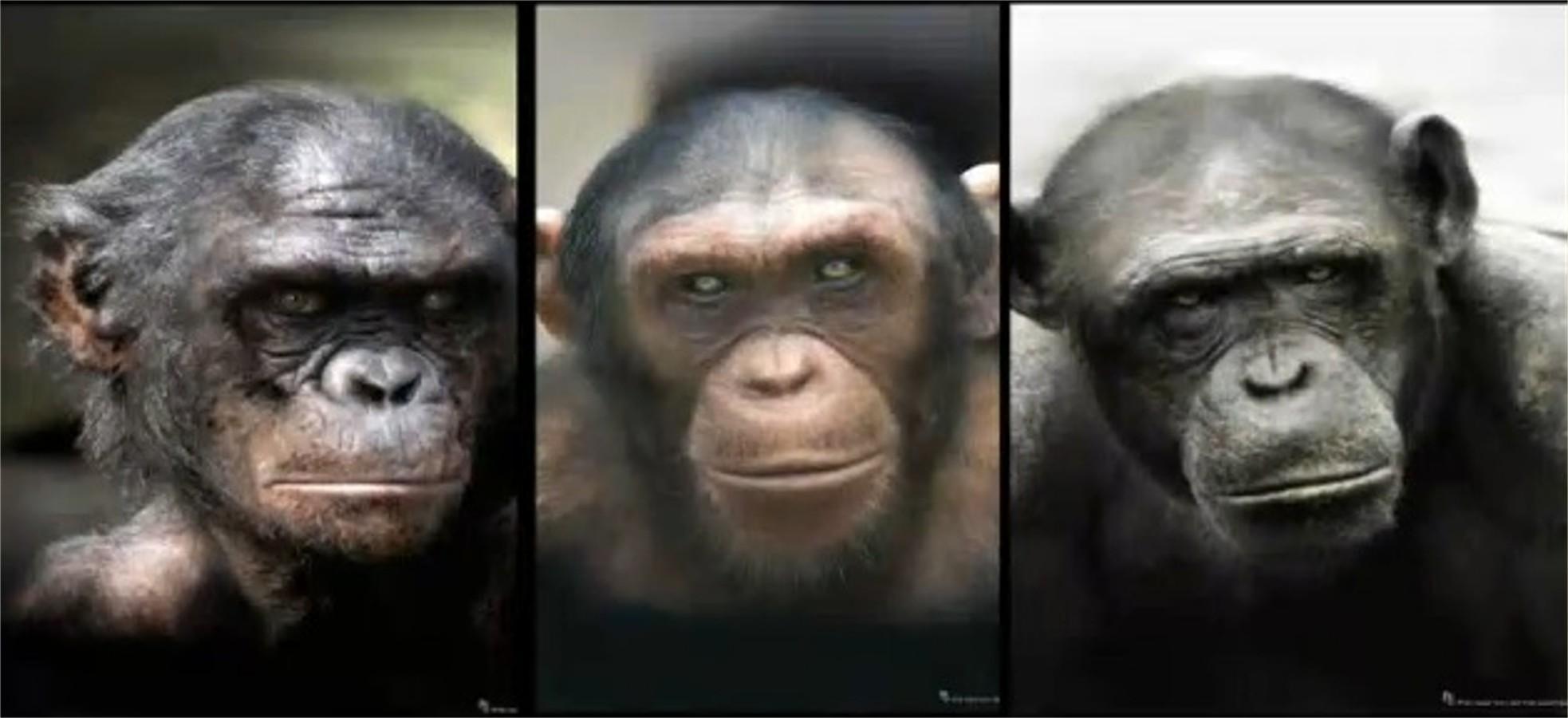 blog talking apes when gender match