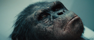 Rise Of The Planet Of The Apes 2011 720p BRRip XviD AC3-ViSiON-www intercambiosvirtuales org-2-153851