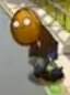 File:Nutzombie.png