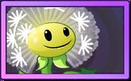 Dandelion Super Rare Seed Packet
