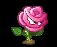 Roseswordman