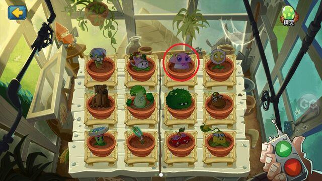 File:New Pink Mushroom.jpg