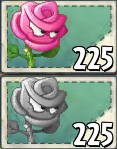 Roseswordman Seed Packet and Imitated Seed Packet