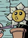 Comichrysantemuenmemum