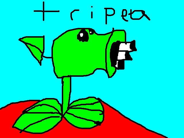 File:Tri pea.png