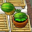 File:Melonpult zengarden.png