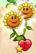 Twin Sunflower giving sun