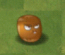 File:BaldAcorn.png