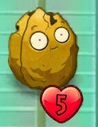 First degrade Wall-Nut