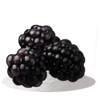 Blackberries icon