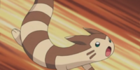 Julie's Furret