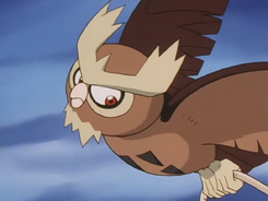 Wings Alexander Noctowl