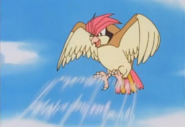 Ash Pidgeotto Gust