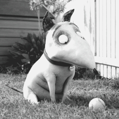 1000  images about Frankenweenie on Pinterest | Tim burton, Comic ...